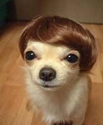 Dog with rug